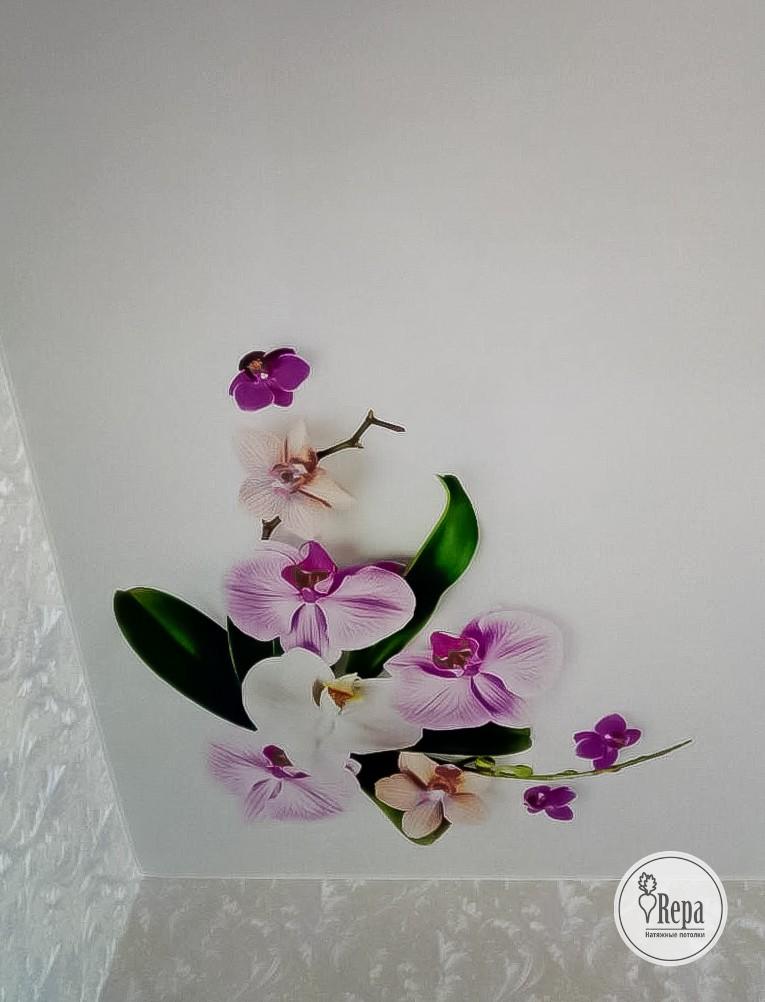 очки представлены варианты картинок орхидеи для натяжных потолков вот